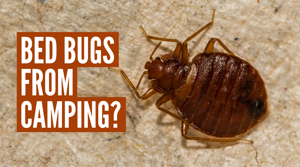 Can you get bed bugs from tent camping